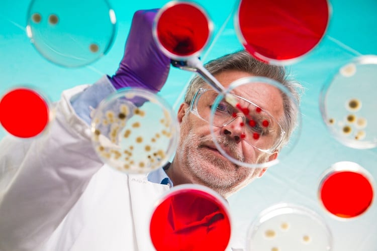 Scientist Using Petri Dishes
